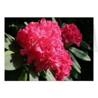 Carte Rhododendron rose - photographie florale
