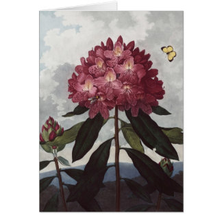 Carte RJ Thornton - le rhododendron de pontic