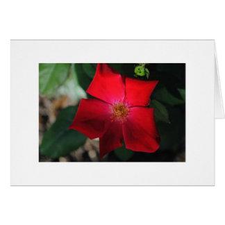 Carte Rojo rouge de fleur/Flor