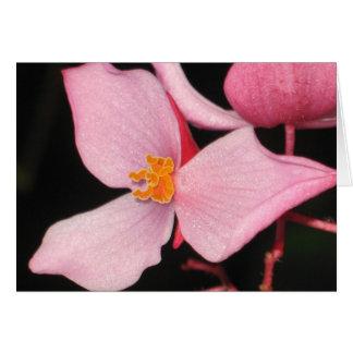 Carte rose de bégonia