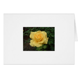Carte Rose jaune