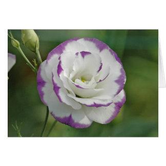 Carte rose pourpre et blanc