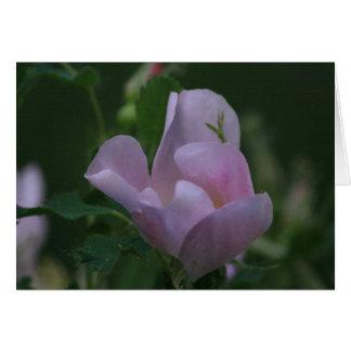 Carte rose sauvage