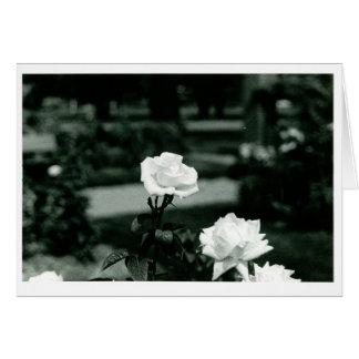 Carte Roses blancs