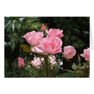 Carte roses roses au printemps