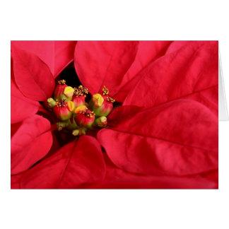 Carte rouge de poinsettia de Joyeux Noël