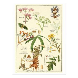 Carte sage vintage de recette de carte postale
