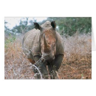 Carte Salutations de remplissage de rhinocéros