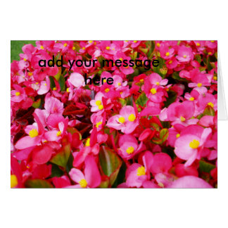 Carte Sensation de bégonia de roses indien,