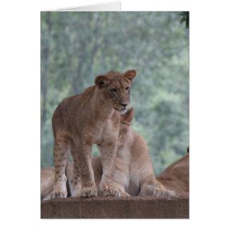Carte Série de zoo, belle lionne