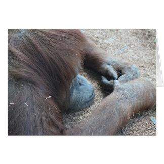 Carte Série de zoo, considérant l'orang-outan