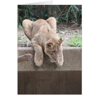 Carte Série de zoo, lionne de acroupissement
