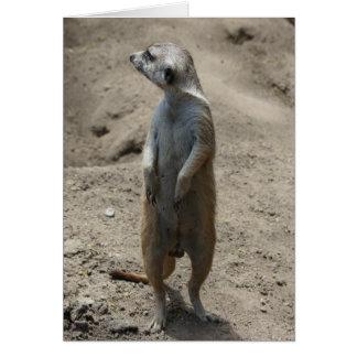 """Carte Série de zoo, Standind Meerkat, """"je pense que je"""