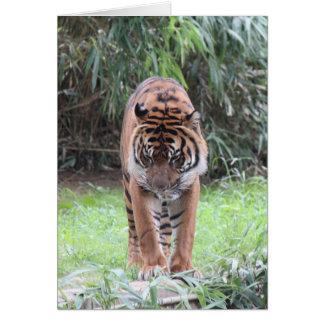 Carte Série de zoo, tigre de Bengale