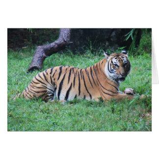 Carte Série de zoo, tigre de Bengale mangeant le