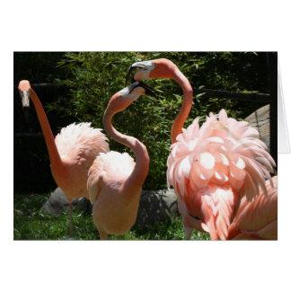 Carte Série de zoo, trio de Flamingso, coloré/rose