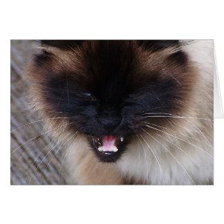 Carte siamoise de chat de Kitty de Persan