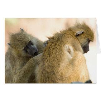 Carte Sud Luwanga de babouins