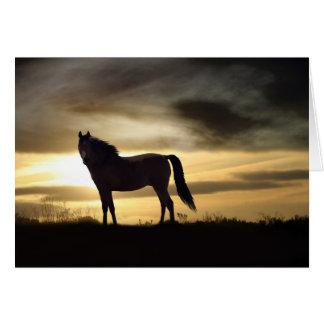 Carte Sympathie de cheval