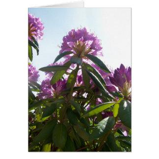 Carte Tailles de rhododendron