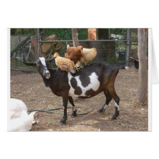 Carte Taxi de chèvre