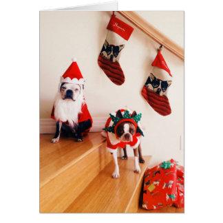 Carte Terriers de Boston dans des costumes de Noël