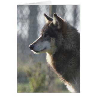 Carte Tête de loup