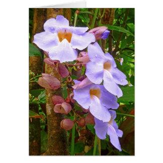 Carte Thunbergia grandiflora - trompette du Bengale
