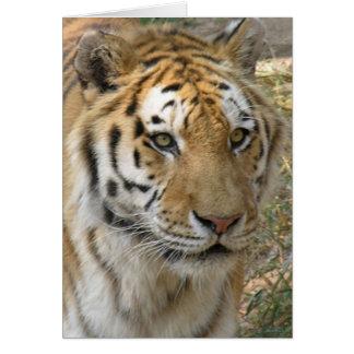 Carte Tigre