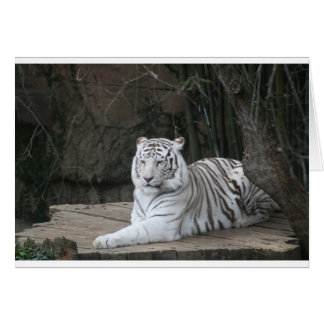 Carte Tigre blanc