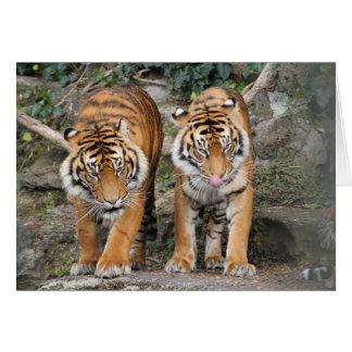 Carte Tigres au zoo d'Auckland