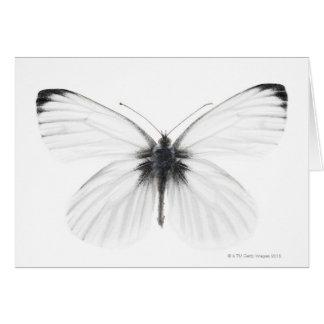 Carte Tir de studio de papillon blanc pointu-veiné