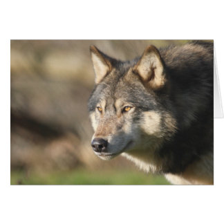 Carte Tir principal de loup