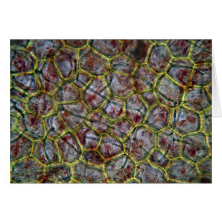 Carte Tomate sous un microscope