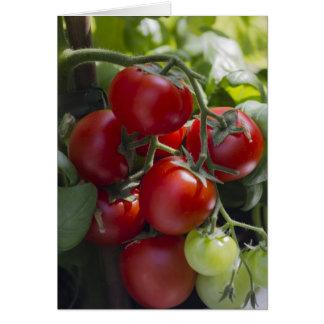 Carte tomates dans le jardin