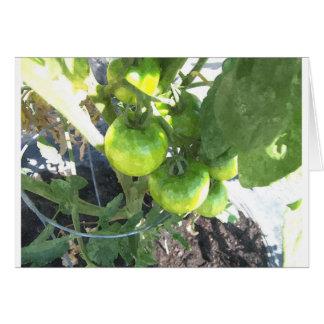 Carte Tomates vertes