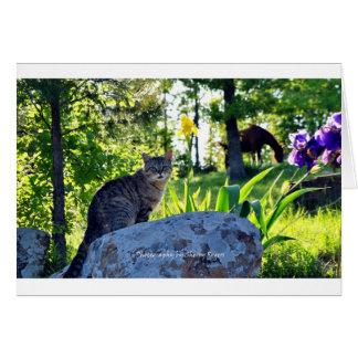 Carte ~ Top Cat sur Rock~