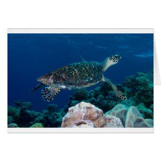 Carte Tortue de mer de Hawksbill sur la Grande barrière
