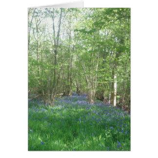 Carte Traînée de jacinthe des bois par le bois de