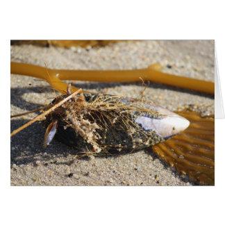 Carte trésors de plage - coquilles et algue