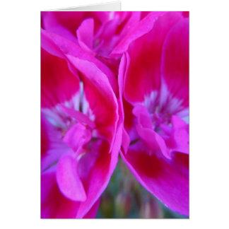 Carte Trio des géraniums de roses indien