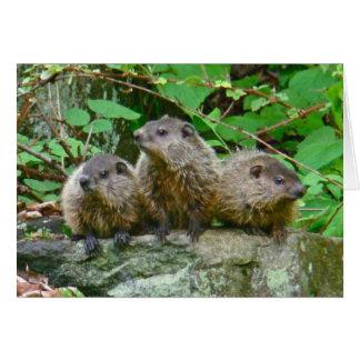 Carte Trois bébé Groundhogs