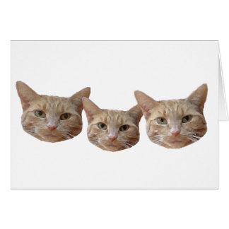 Carte Trois beiges/chats tigrés blancs/oranges
