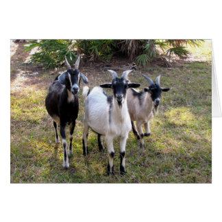Carte Trois chèvres de Billy