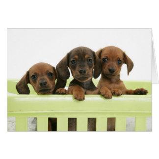 Carte Trois chiots adorables de basset allemand