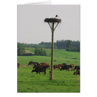Carte Troupeau de vaches
