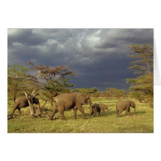 Carte Troupeau d'éléphant africain, africana de
