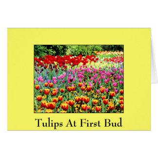 Carte Tulipes au premier bourgeon