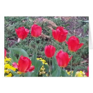 Carte Tulipes au printemps