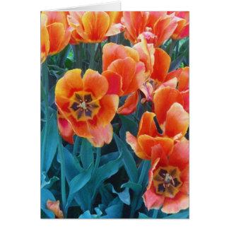 Carte Tulipes de pavot